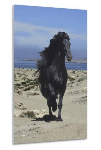Fantasy Horses 08-Bob Langrish-Metal Print
