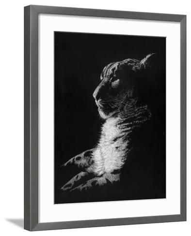 Radiant Phantom-Barbara Keith-Framed Art Print