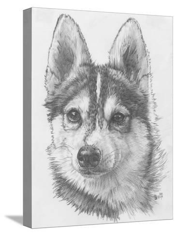 Alaskan Klee Kai-Barbara Keith-Stretched Canvas Print