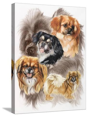 Tibetan Spaniel-Barbara Keith-Stretched Canvas Print