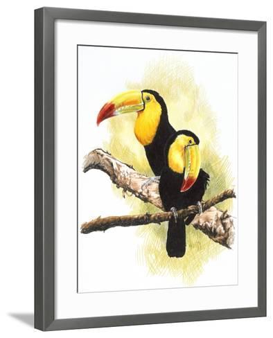 Toucans-Barbara Keith-Framed Art Print