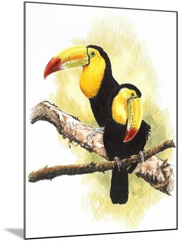 Toucans-Barbara Keith-Mounted Giclee Print