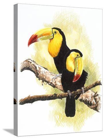 Toucans-Barbara Keith-Stretched Canvas Print