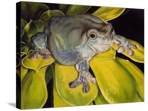 Got Bugs?-Barbara Keith-Stretched Canvas Print