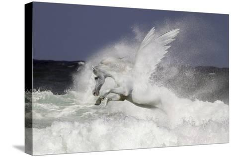 Fantasy Horses 39-Bob Langrish-Stretched Canvas Print