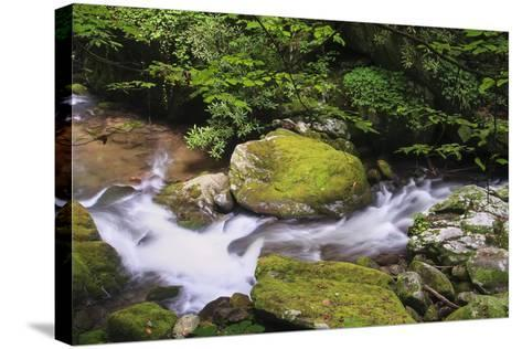 Roaring Fork Stream-Bob Rouse-Stretched Canvas Print