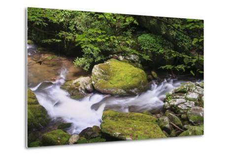 Roaring Fork Stream-Bob Rouse-Metal Print