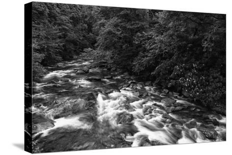 West Prong River-Bob Rouse-Stretched Canvas Print