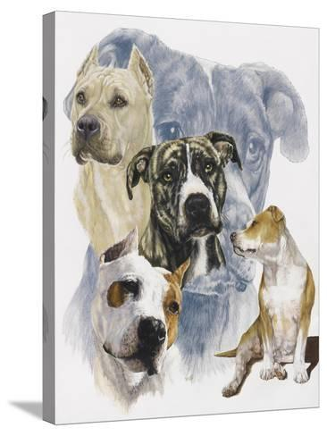 American Staffordshire Terrier-Barbara Keith-Stretched Canvas Print