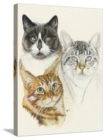 American Shorthair-Barbara Keith-Stretched Canvas Print