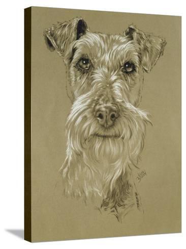 Irish Terrier-Barbara Keith-Stretched Canvas Print
