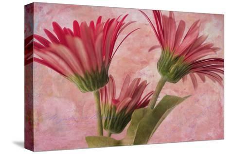 Gerber Trio-Bob Rouse-Stretched Canvas Print