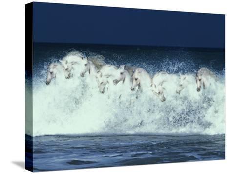 Foam Followers-Bob Langrish-Stretched Canvas Print