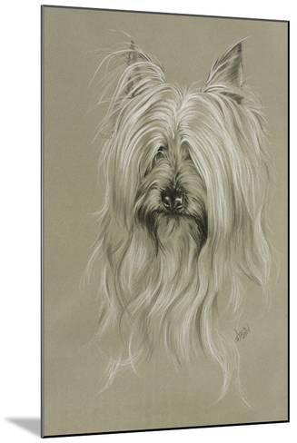 Silky Terrier-Barbara Keith-Mounted Giclee Print