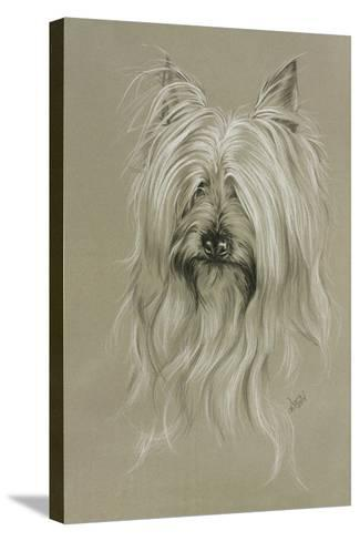 Silky Terrier-Barbara Keith-Stretched Canvas Print