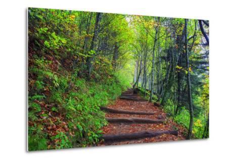 Appalachian Trail 3-Bob Rouse-Metal Print