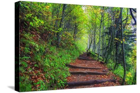 Appalachian Trail 3-Bob Rouse-Stretched Canvas Print