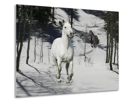 Snow Chase-Bob Langrish-Metal Print