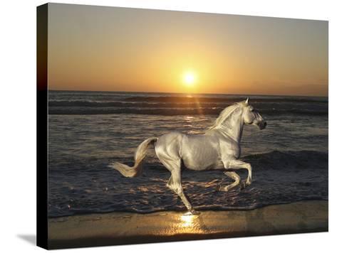 Sunset-Bob Langrish-Stretched Canvas Print