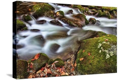 Rocks and Leaves-Bob Rouse-Stretched Canvas Print