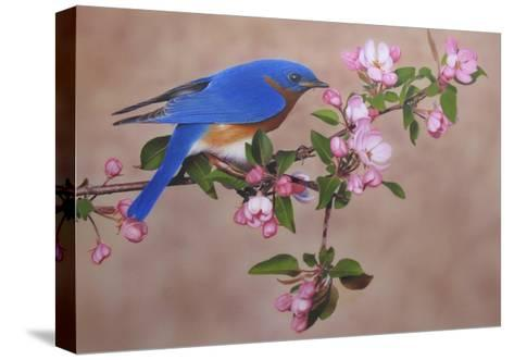 Bluebird-Clarence Stewart-Stretched Canvas Print