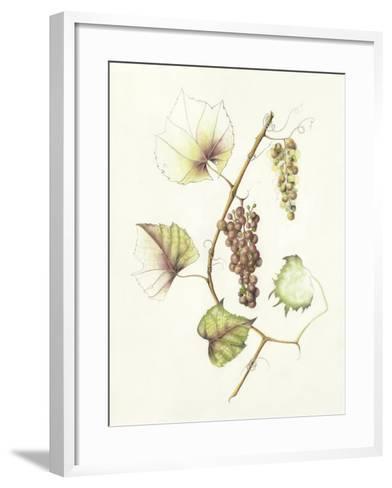 Concord Grapes-Deborah Kopka-Framed Art Print