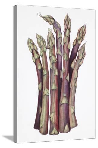Asparagus-Deborah Kopka-Stretched Canvas Print