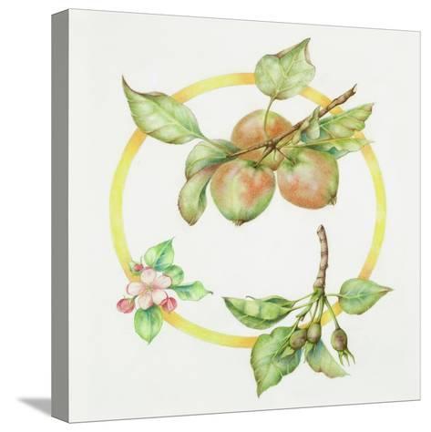 Apple Cycle-Deborah Kopka-Stretched Canvas Print