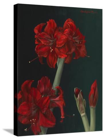 Amaryllis Amigo-Christopher Pierce-Stretched Canvas Print