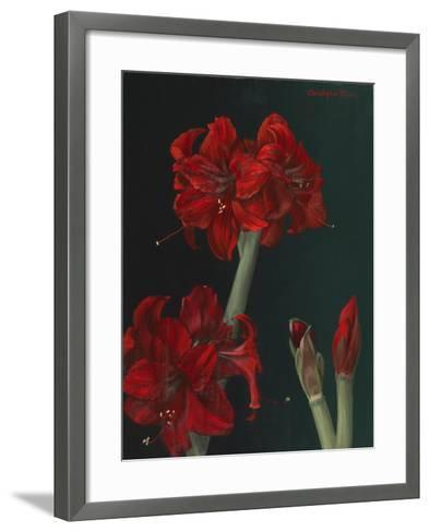 Amaryllis Amigo-Christopher Pierce-Framed Art Print