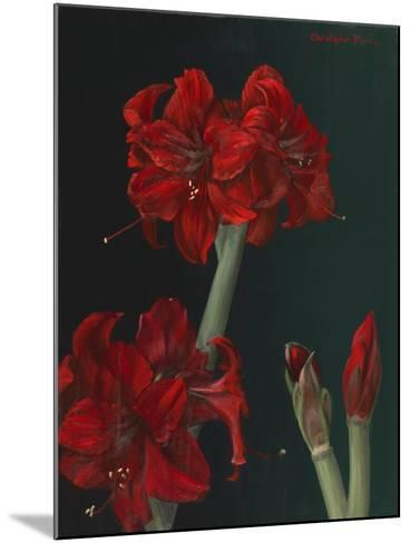 Amaryllis Amigo-Christopher Pierce-Mounted Giclee Print