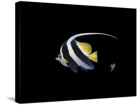 Bannerfish-Durwood Coffey-Stretched Canvas Print