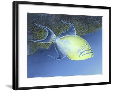 Trigger Fish-Durwood Coffey-Framed Art Print