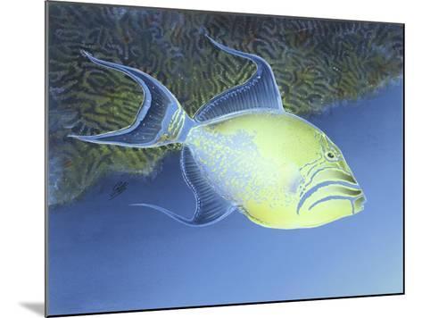 Trigger Fish-Durwood Coffey-Mounted Giclee Print