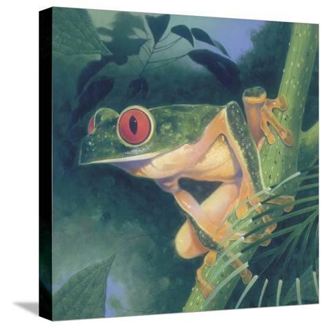 Tree Frog-Durwood Coffey-Stretched Canvas Print