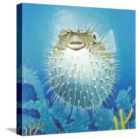 Puffer Fish-Durwood Coffey-Stretched Canvas Print