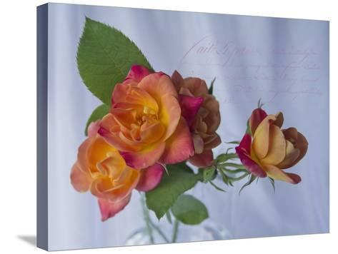 Peachy Rose-Bob Rouse-Stretched Canvas Print