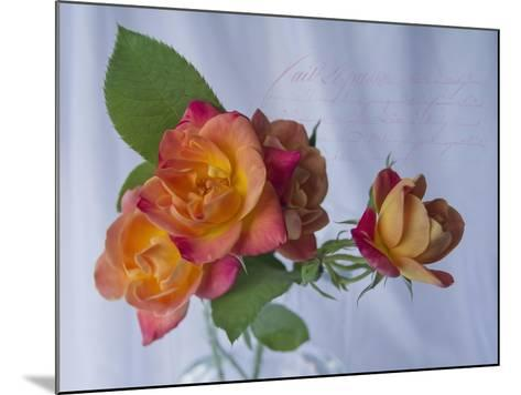 Peachy Rose-Bob Rouse-Mounted Giclee Print