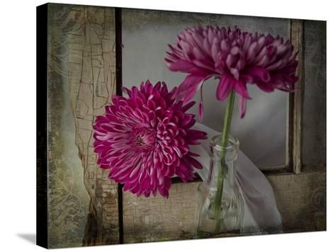 Mums by a Window-Bob Rouse-Stretched Canvas Print