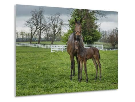 Mare and Foal 2-Galloimages Online-Metal Print