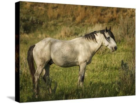 Wild Horse-Galloimages Online-Stretched Canvas Print
