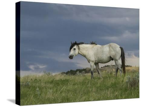 Wild Horse - Stallion (Storm)-Galloimages Online-Stretched Canvas Print