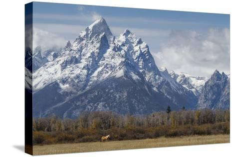 A Horse in Front of the Grand Teton-Galloimages Online-Stretched Canvas Print
