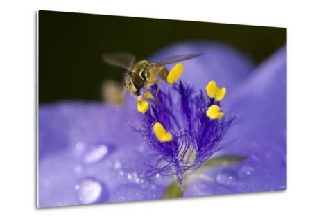 Flower and Bee-Gordon Semmens-Metal Print