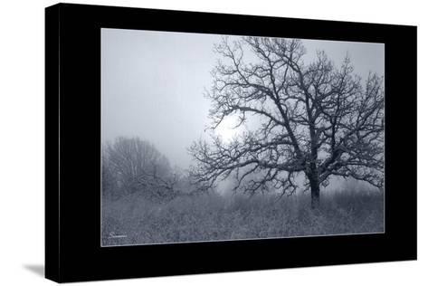 Silver Tone Buffalo River 1-Gordon Semmens-Stretched Canvas Print
