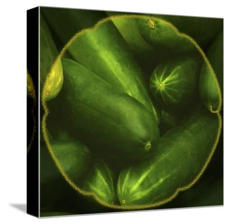 Cucumbers-Harold Silverman-Stretched Canvas Print