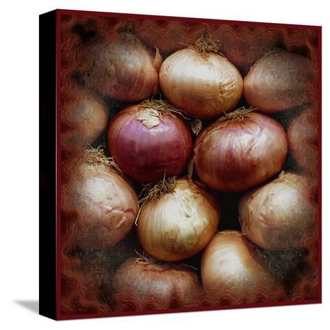 Onions-Harold Silverman-Stretched Canvas Print