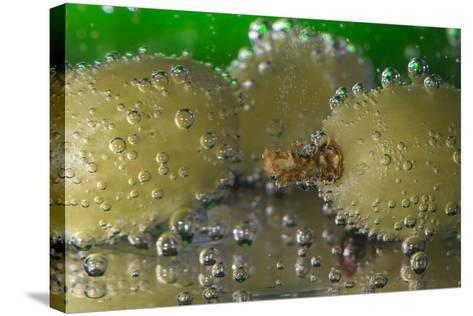 Grapes Underwater-Gordon Semmens-Stretched Canvas Print
