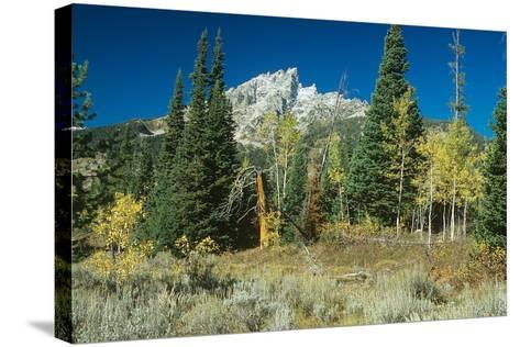 Grand Teton 11-Gordon Semmens-Stretched Canvas Print