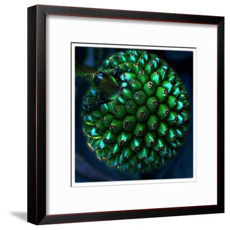 Pod of Seeds-Harold Silverman-Framed Art Print